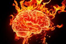 «Наш мозг». Читать всем!